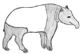 Tapir_Tapir