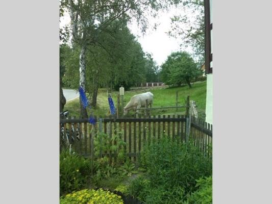 Landschaft mit Kuh